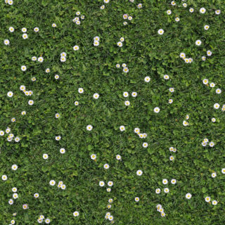 Expodecor-daisies in clover, floral background