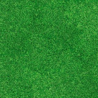 Expodecor-Grass